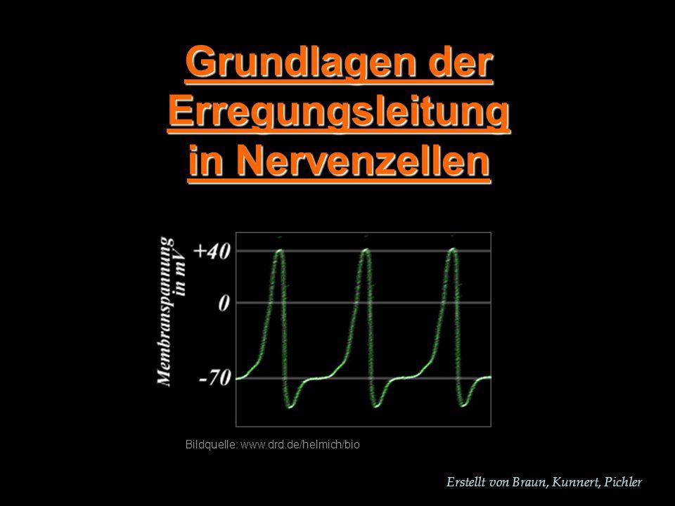 Erstellt von Braun, Kunnert, Pichler Grundlagen der Erregungsleitung in Nervenzellen Bildquelle: www.drd.de/helmich/bio