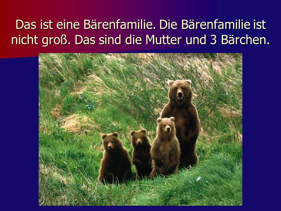 Das ist eine Bärenfamilie. Die Bärenfamilie ist nicht groß. Das sind die Mutter und 3 Bärchen.