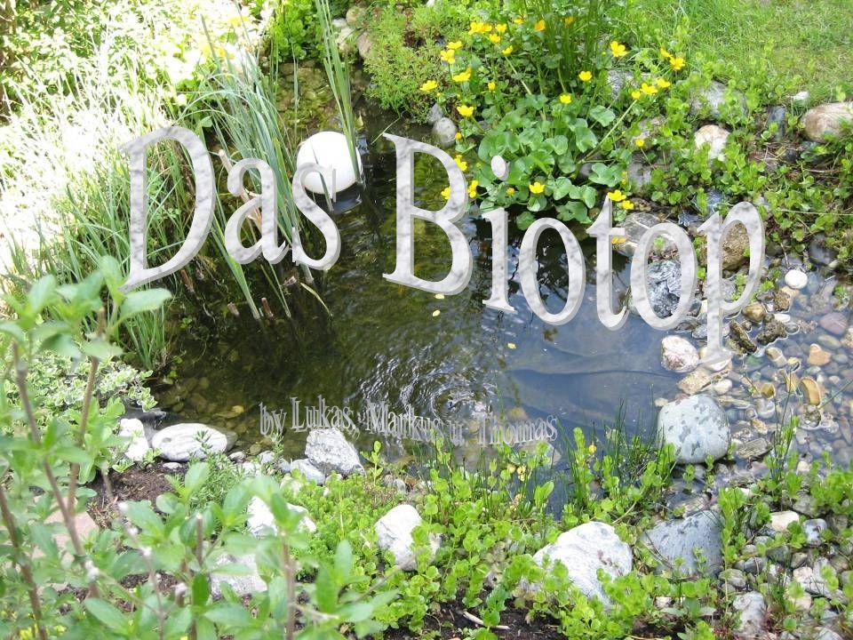 Entwicklung der Pflanzen Wasserpflanzen Sumpfdotterblume Binsen Rohrkolben Pfennigkraut Wasserschwertlilie