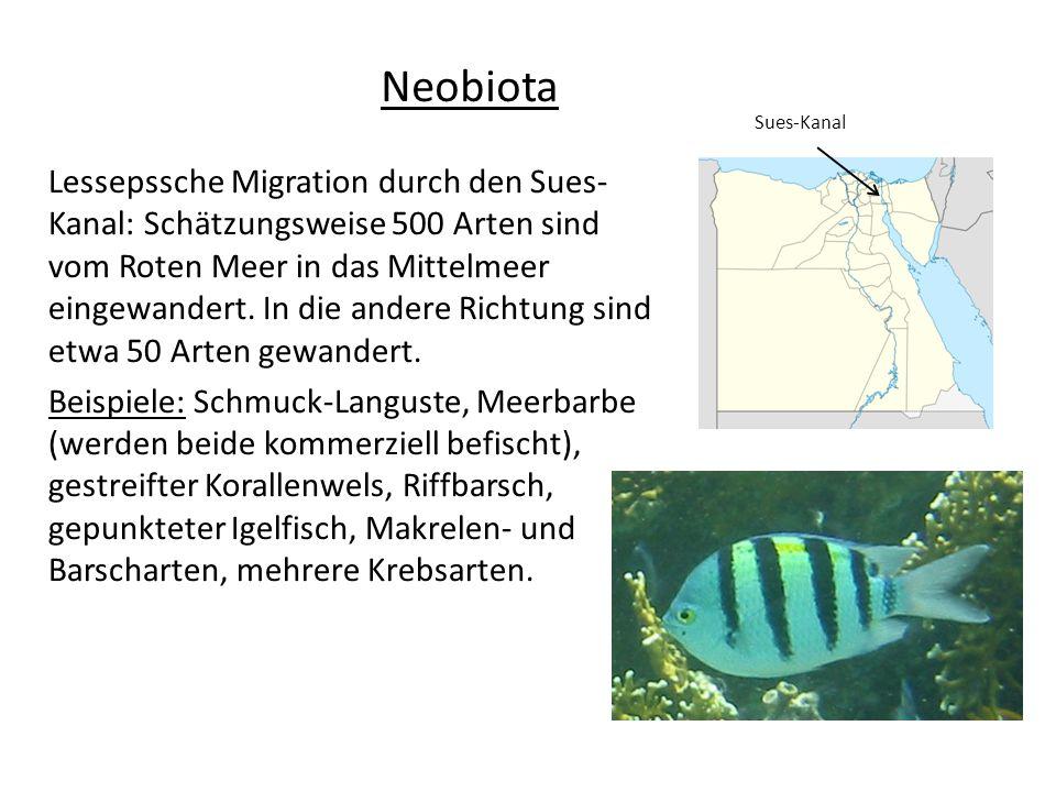 Lessepssche Migration durch den Sues- Kanal: Schätzungsweise 500 Arten sind vom Roten Meer in das Mittelmeer eingewandert. In die andere Richtung sind