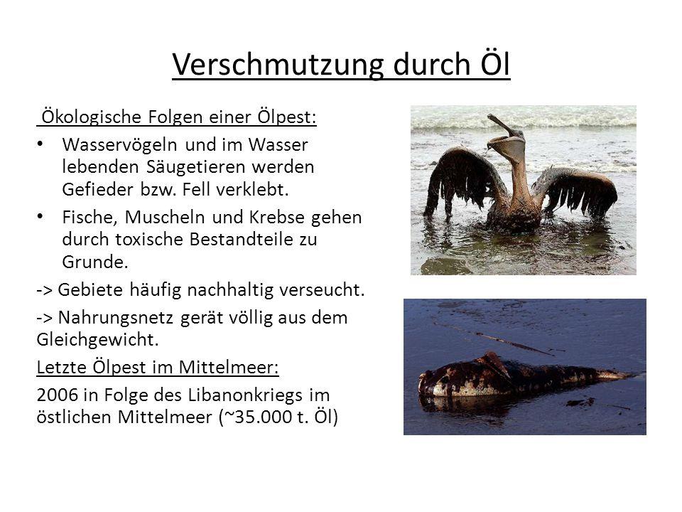 Verschmutzung durch Öl Ökologische Folgen einer Ölpest: Wasservögeln und im Wasser lebenden Säugetieren werden Gefieder bzw. Fell verklebt. Fische, Mu