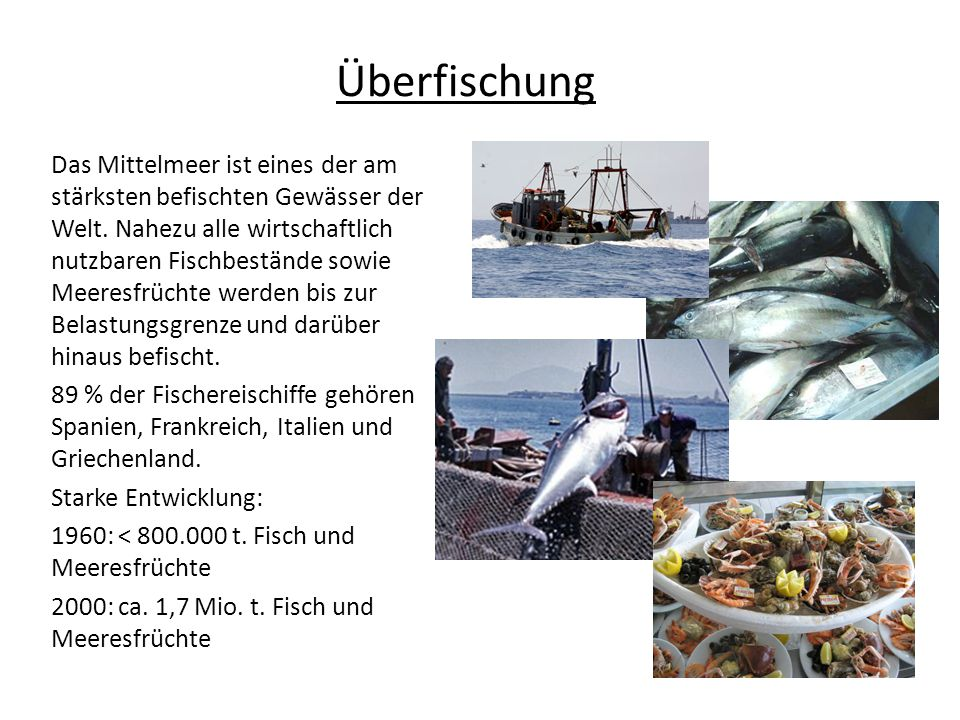 Überfischung Das Mittelmeer ist eines der am stärksten befischten Gewässer der Welt. Nahezu alle wirtschaftlich nutzbaren Fischbestände sowie Meeresfr