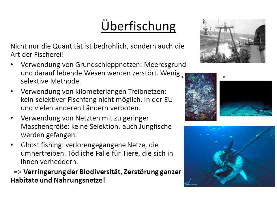 Nicht nur die Quantität ist bedrohlich, sondern auch die Art der Fischerei! Verwendung von Grundschleppnetzen: Meeresgrund und darauf lebende Wesen we