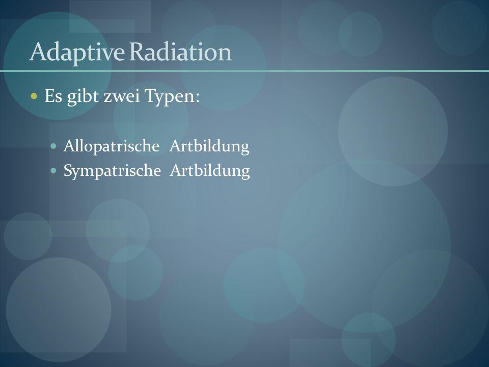 Adaptive Radiation Es gibt zwei Typen: Allopatrische Artbildung Sympatrische Artbildung
