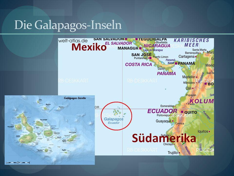 Finken auf den Galapagos-Inseln