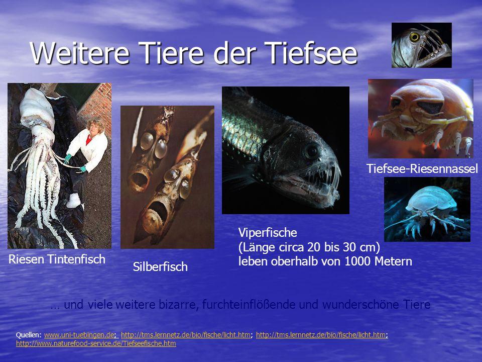 Weitere Tiere der Tiefsee Viperfische (Länge circa 20 bis 30 cm) leben oberhalb von 1000 Metern Tiefsee-Riesennassel Silberfisch … und viele weitere b