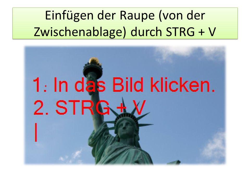 Einfügen der Raupe (von der Zwischenablage) durch STRG + V