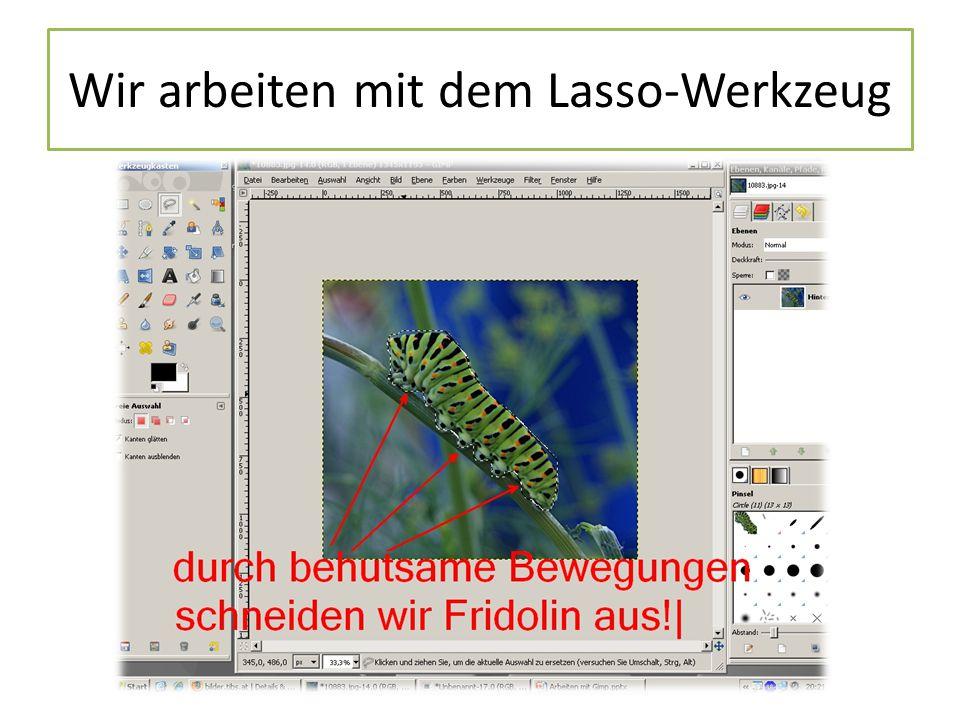Wir arbeiten mit dem Lasso-Werkzeug
