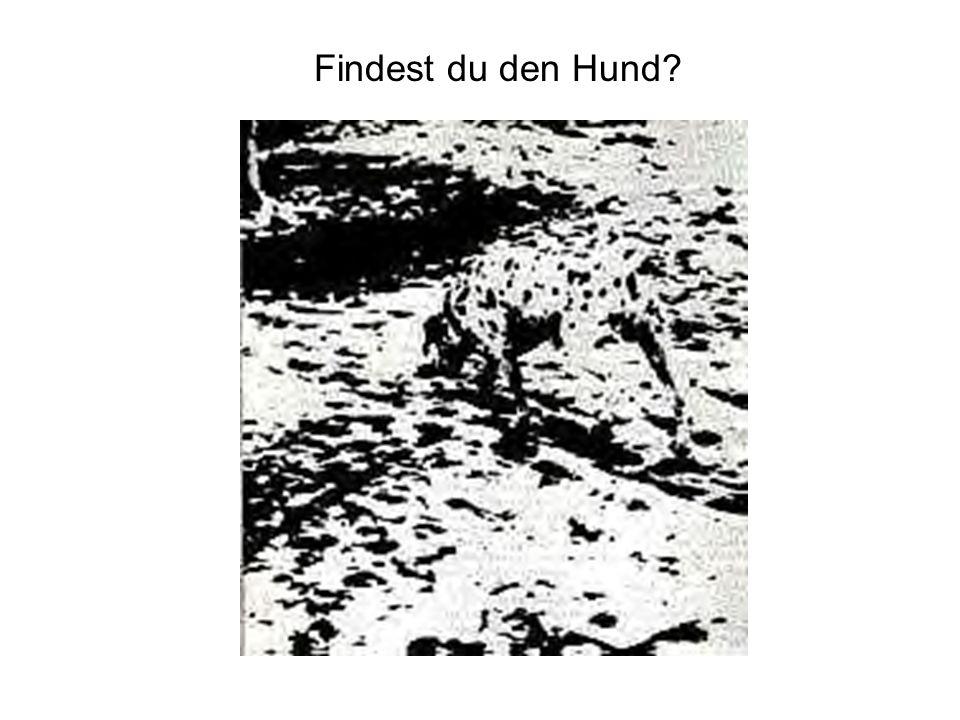 Findest du den Hund?