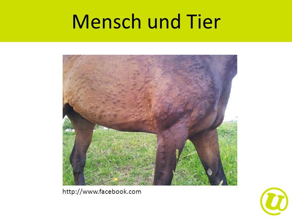 http://www.facebook.com Mensch und Tier