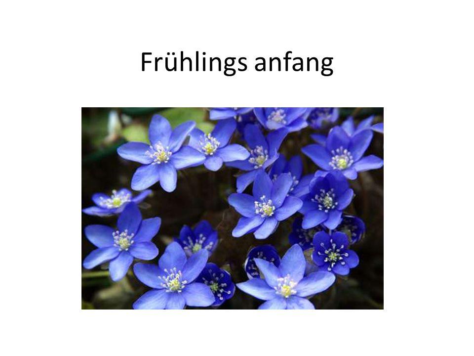 Frühlings anfang