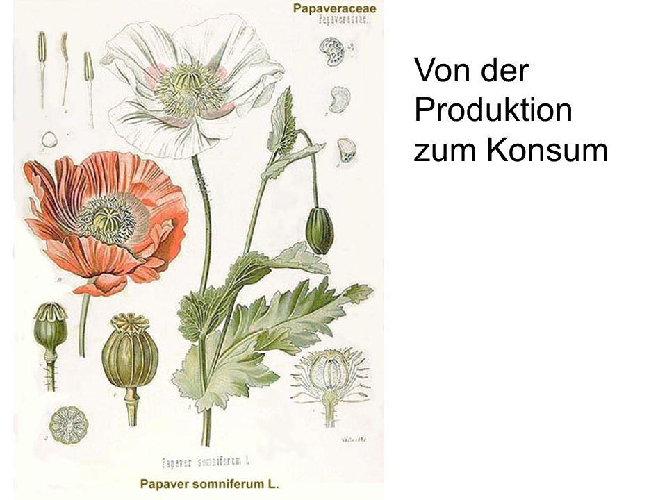 Von der Produktion zum Konsum