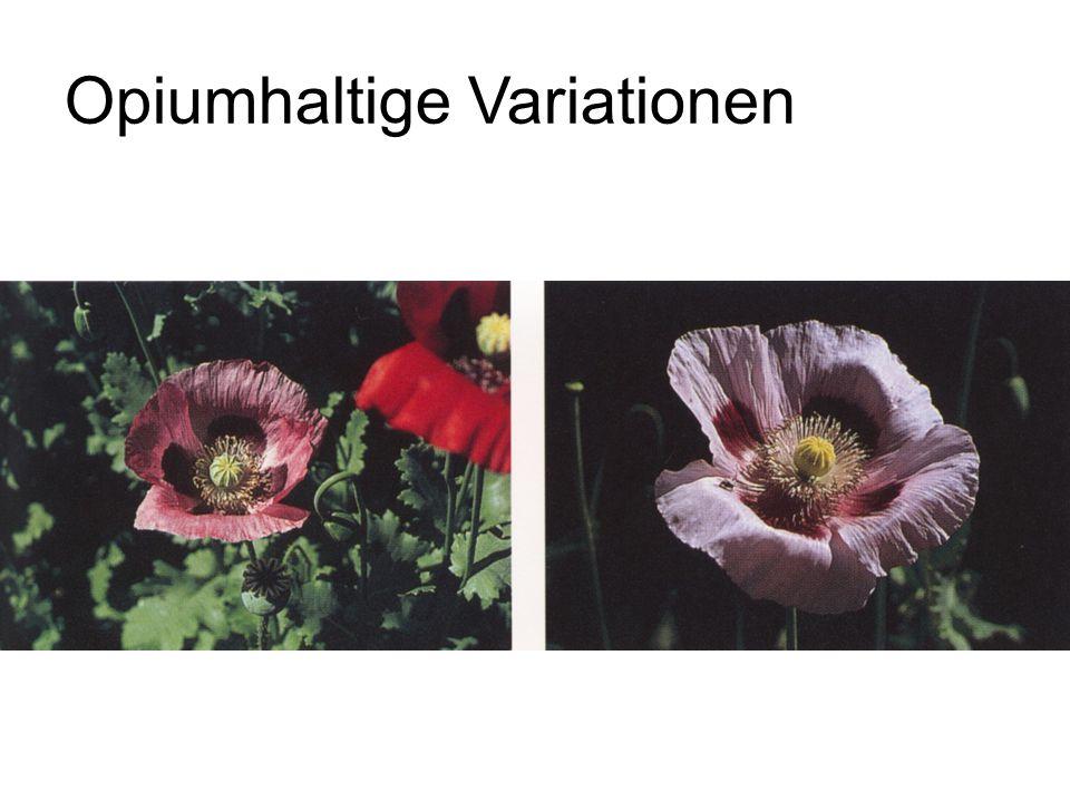 Opiumhaltige Variationen