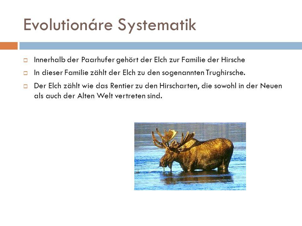 Evolutionáre Systematik  Innerhalb der Paarhufer gehört der Elch zur Familie der Hirsche  In dieser Familie zählt der Elch zu den sogenannten Trughi