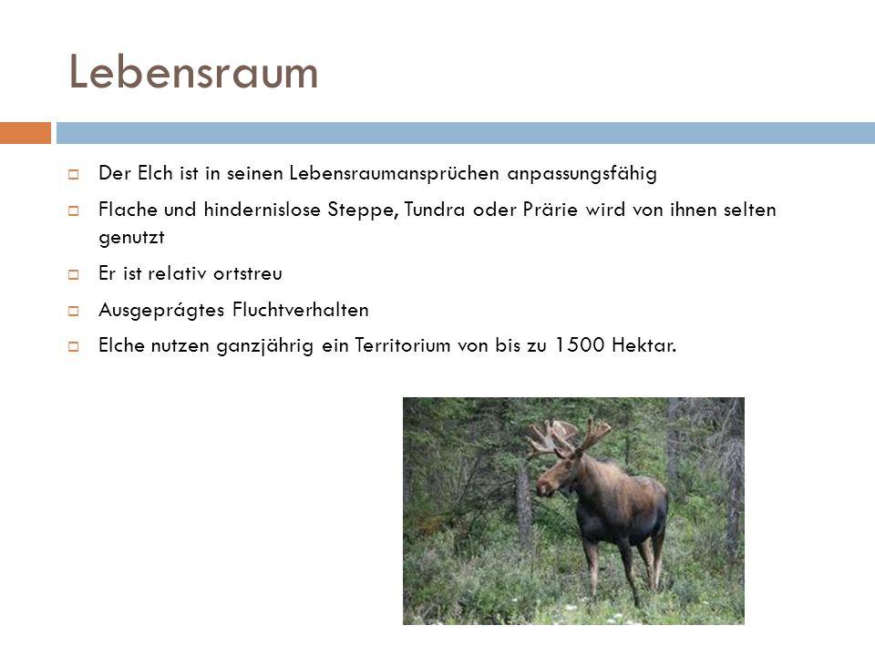 Lebensraum  Der Elch ist in seinen Lebensraumansprüchen anpassungsfähig  Flache und hindernislose Steppe, Tundra oder Prärie wird von ihnen selten g