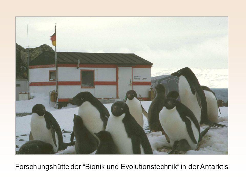 """Forschungshütte der """"Bionik und Evolutionstechnik"""" in der Antarktis"""