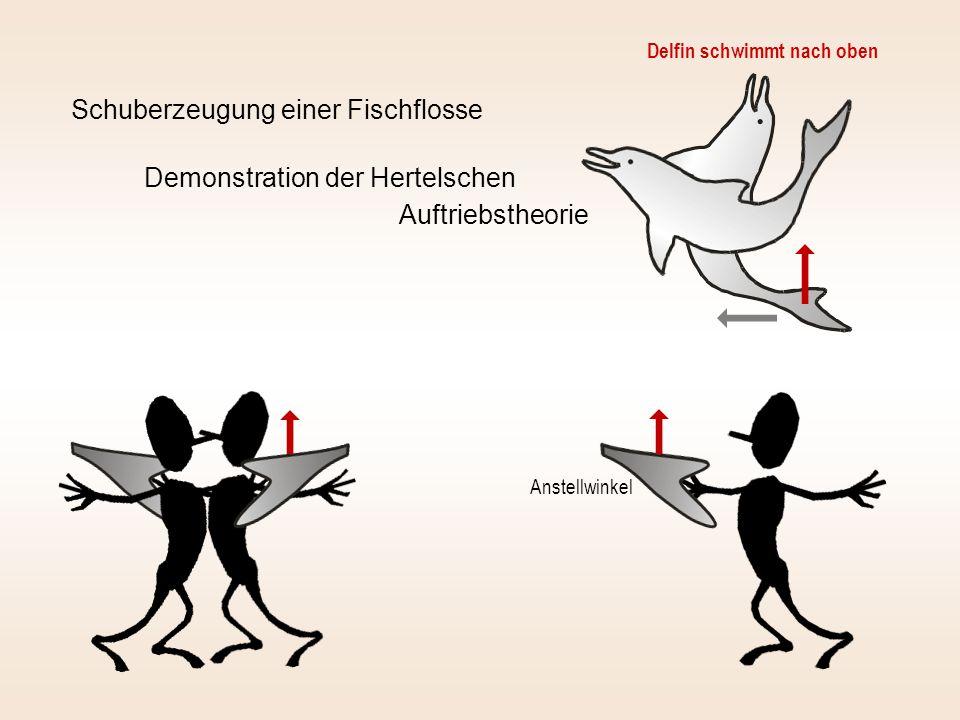 Schuberzeugung einer Fischflosse Demonstration der Hertelschen Auftriebstheorie Delfin schwimmt nach oben Anstellwinkel