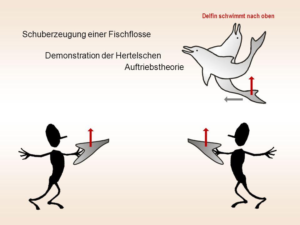 Auftrieb Schub Bei Vorwärtsbewegung Erhöhung des Anstellwinkels damit kein Abtrieb entsteht Schräganströmung durch Bewegung nach oben (Hier Aufwärtsbewegung !)