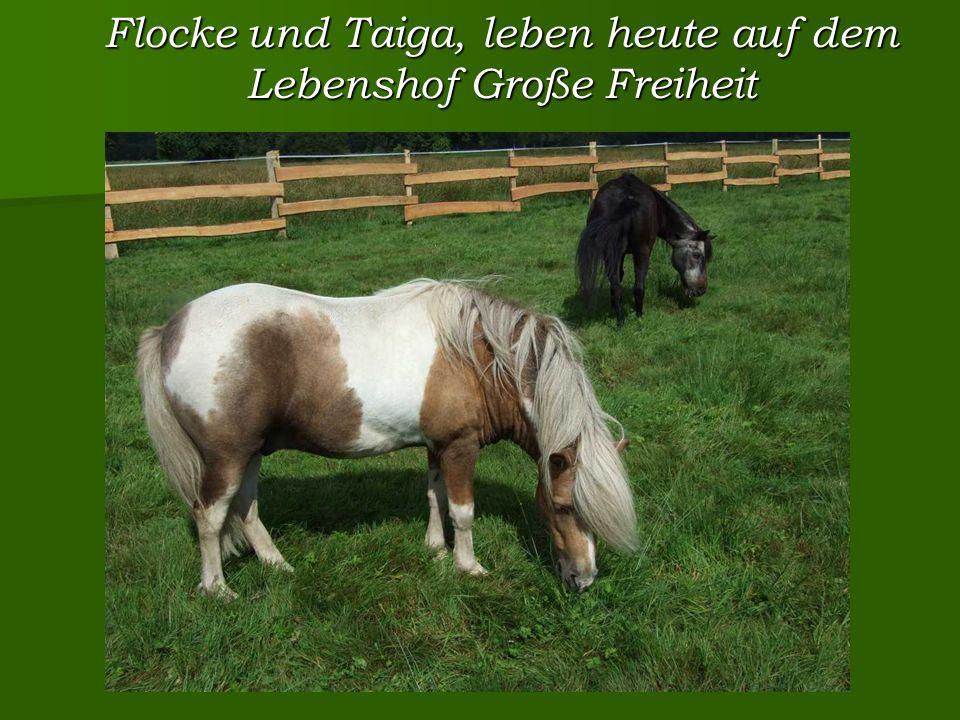 Flocke und Taiga, leben heute auf dem Lebenshof Große Freiheit