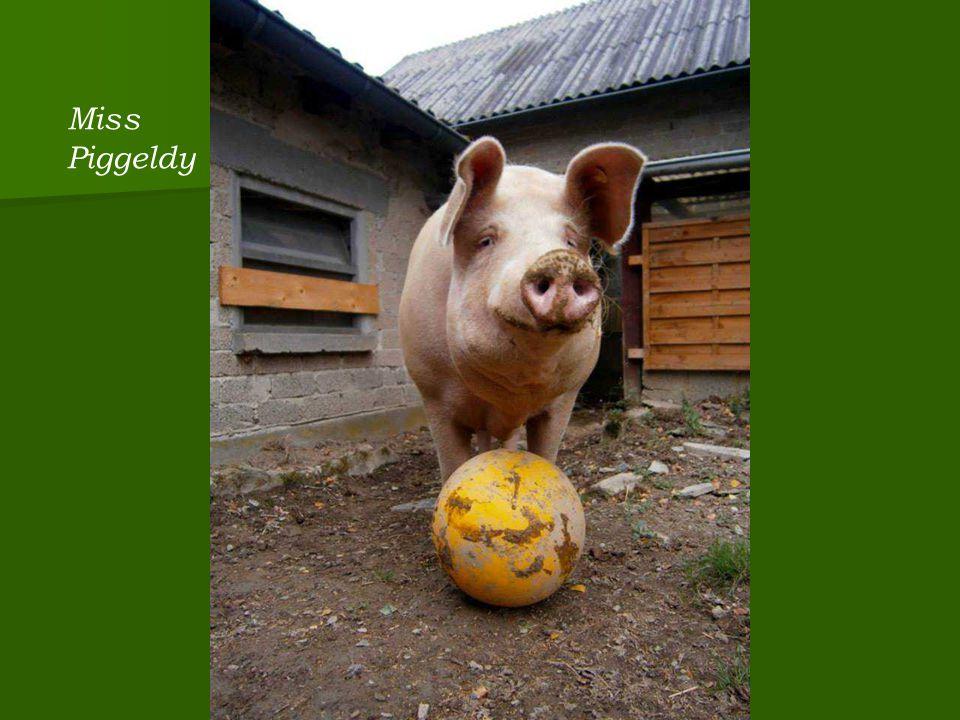 Miss Piggeldy