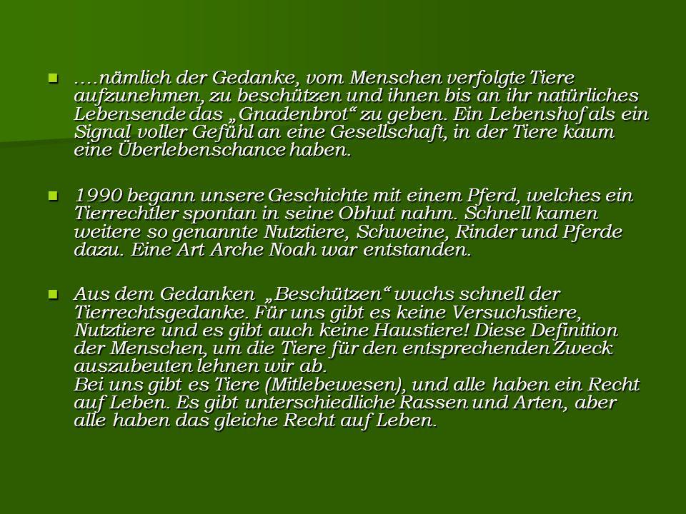 """Eberhard, Inga und Ludwig auf Pferdeglück Inga (rechts) schlief nach einigen Monaten """"neuen Lebens friedlich ein."""
