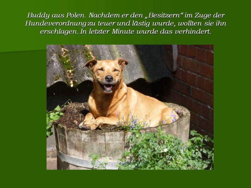 Buddy aus Polen.