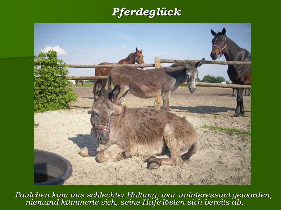Pferdeglück Pferdeglück Paulchen kam aus schlechter Haltung, war uninteressant geworden, niemand kümmerte sich, seine Hufe lösten sich bereits ab.