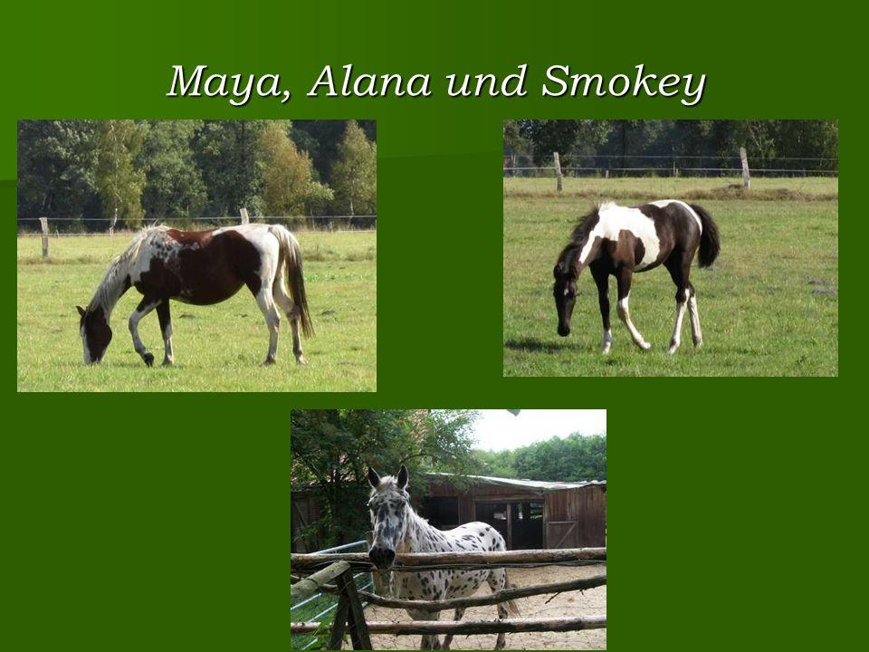 Maya, Alana und Smokey