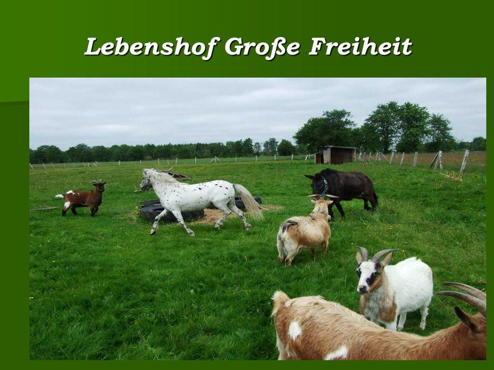 Lebenshof Große Freiheit