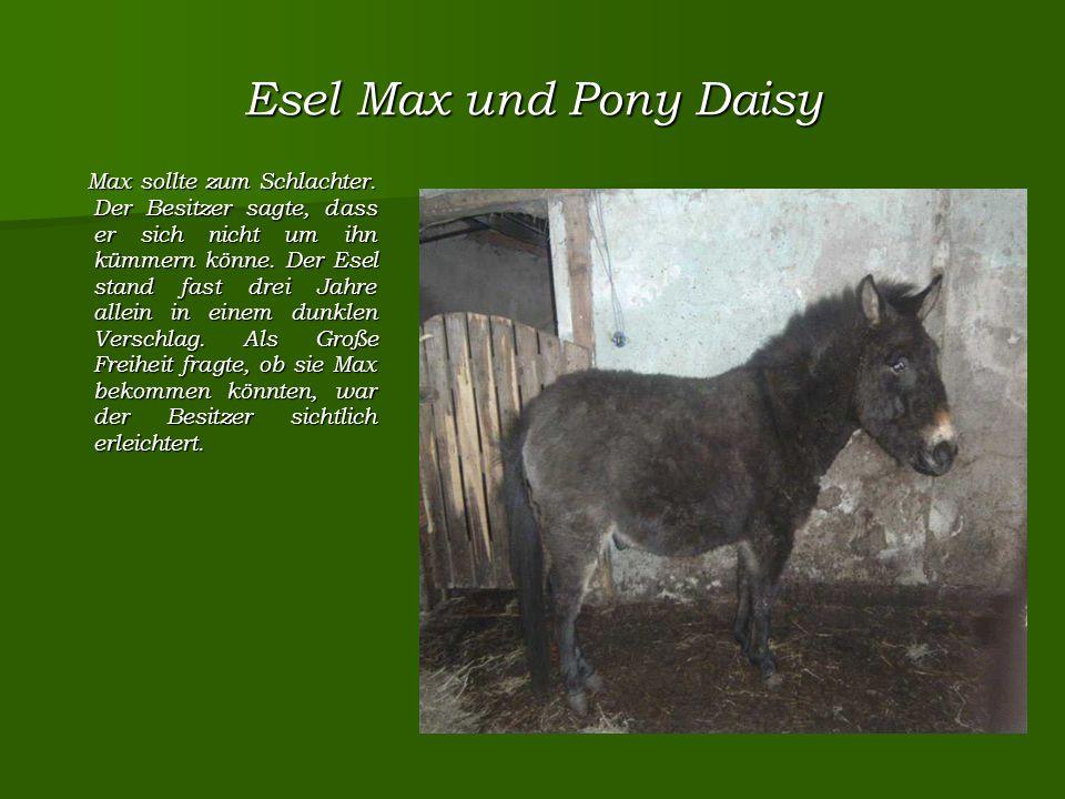 Esel Max und Pony Daisy Max sollte zum Schlachter.