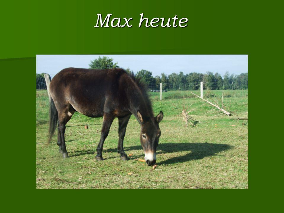 Max heute