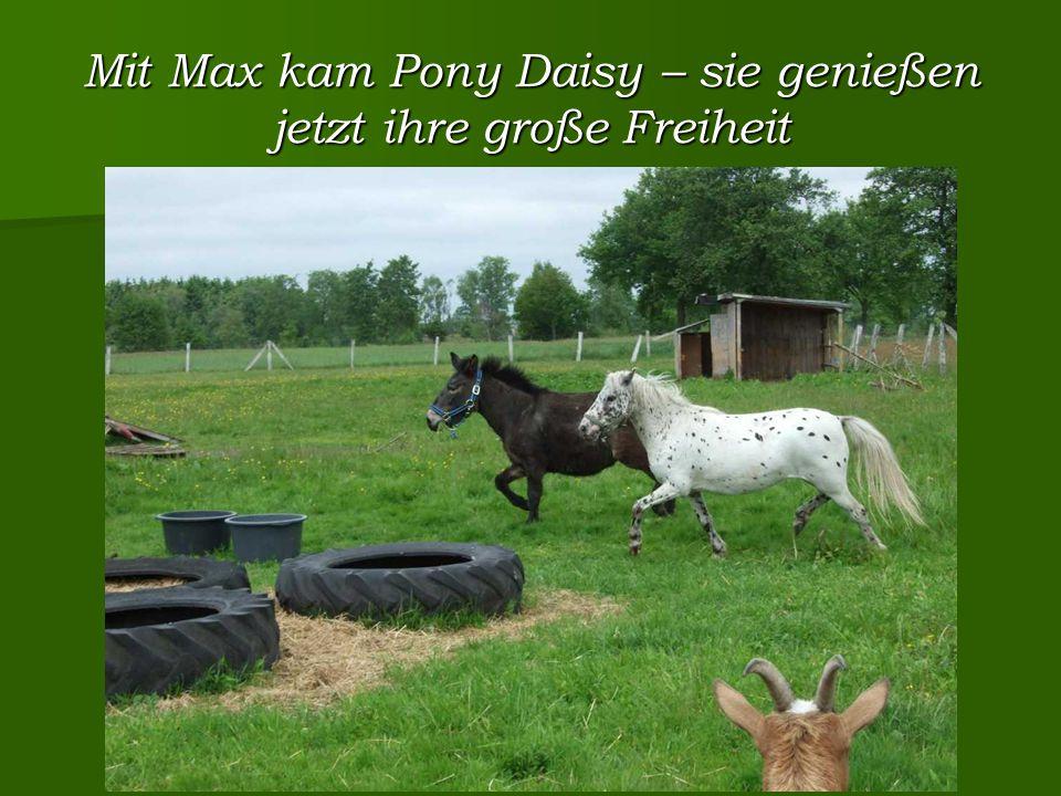 Mit Max kam Pony Daisy – sie genießen jetzt ihre große Freiheit