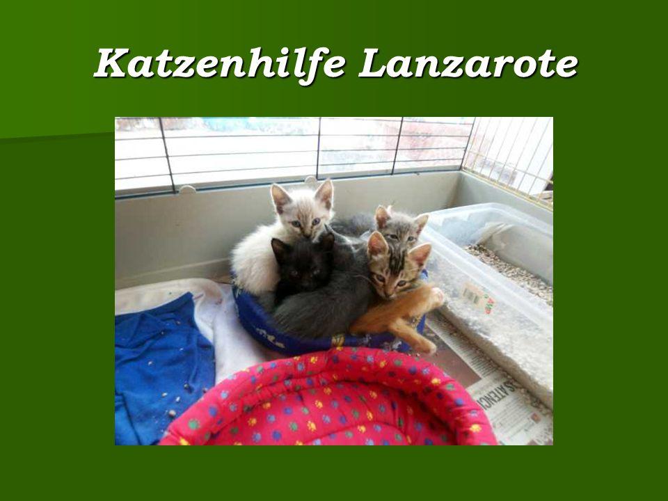 Katzenhilfe Lanzarote