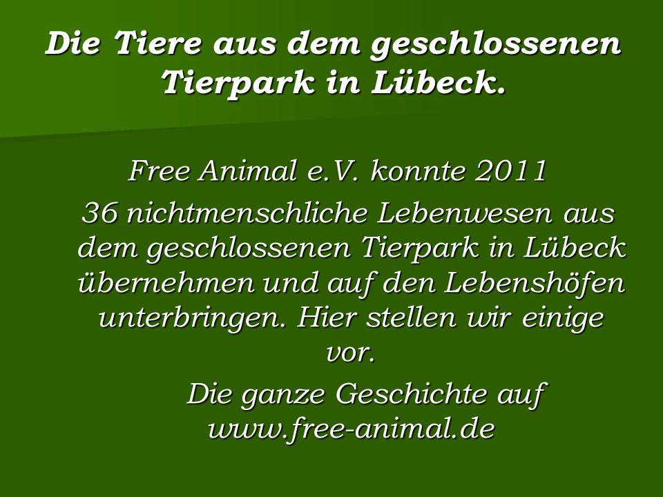 Die Tiere aus dem geschlossenen Tierpark in Lübeck.