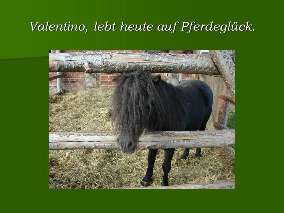 Valentino, lebt heute auf Pferdeglück.