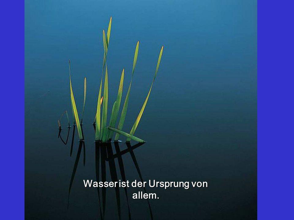 Wasser ist der Ursprung von allem.