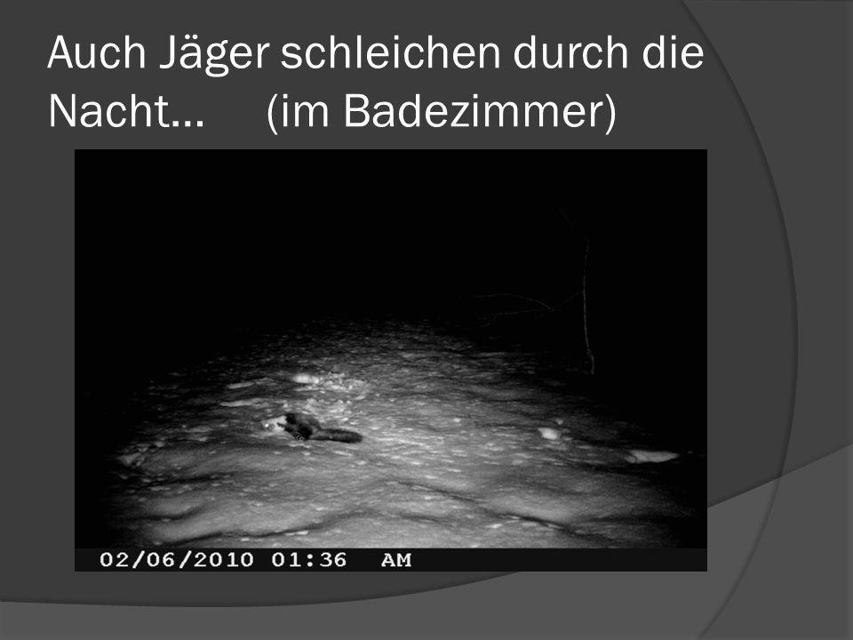 Auch Jäger schleichen durch die Nacht… (im Badezimmer)
