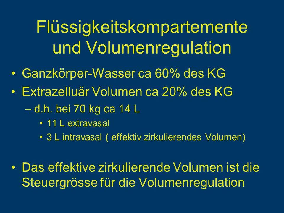 Flüssigkeitskompartemente und Volumenregulation Ganzkörper-Wasser ca 60% des KG Extrazelluär Volumen ca 20% des KG –d.h.