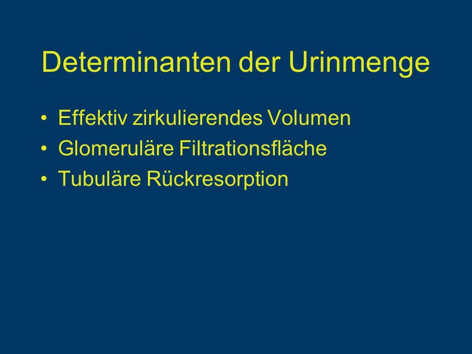 Determinanten der Urinmenge Effektiv zirkulierendes Volumen Glomeruläre Filtrationsfläche Tubuläre Rückresorption