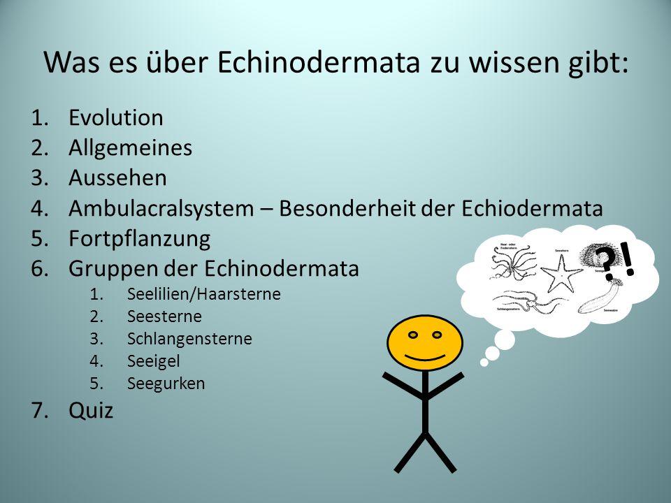 Was es über Echinodermata zu wissen gibt: 1.Evolution 2.Allgemeines 3.Aussehen 4.Ambulacralsystem – Besonderheit der Echiodermata 5.Fortpflanzung 6.Gruppen der Echinodermata 1.Seelilien/Haarsterne 2.Seesterne 3.Schlangensterne 4.Seeigel 5.Seegurken 7.Quiz