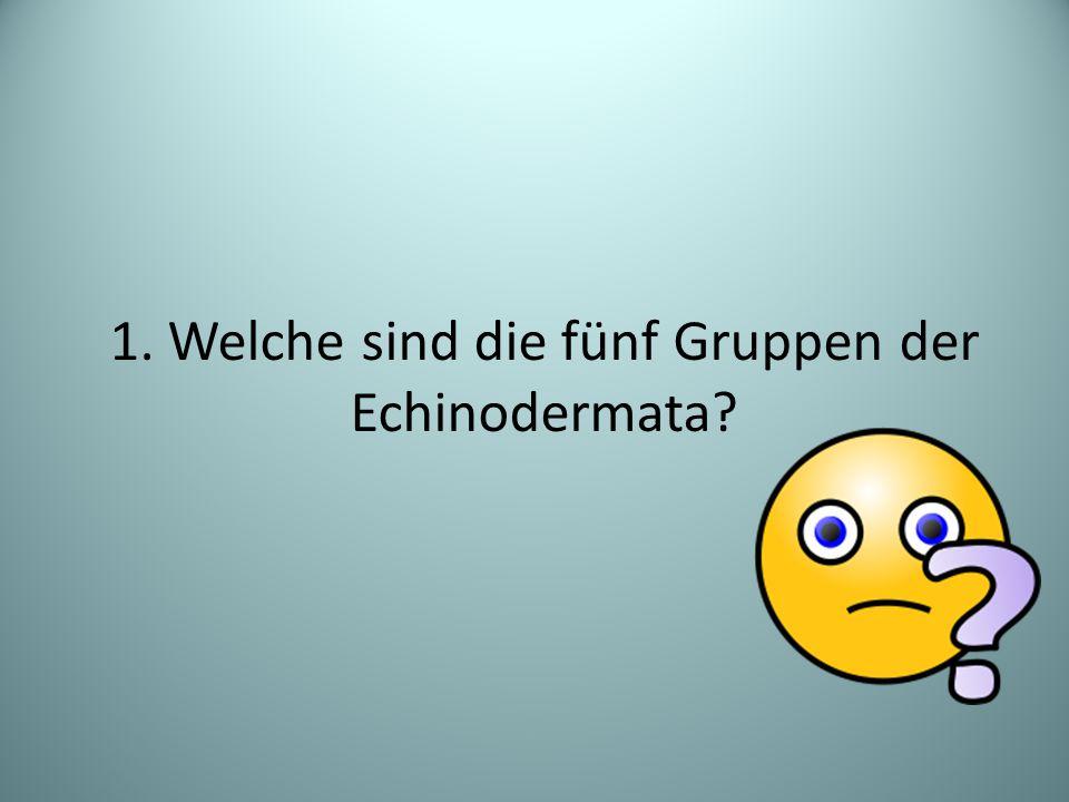1. Welche sind die fünf Gruppen der Echinodermata?