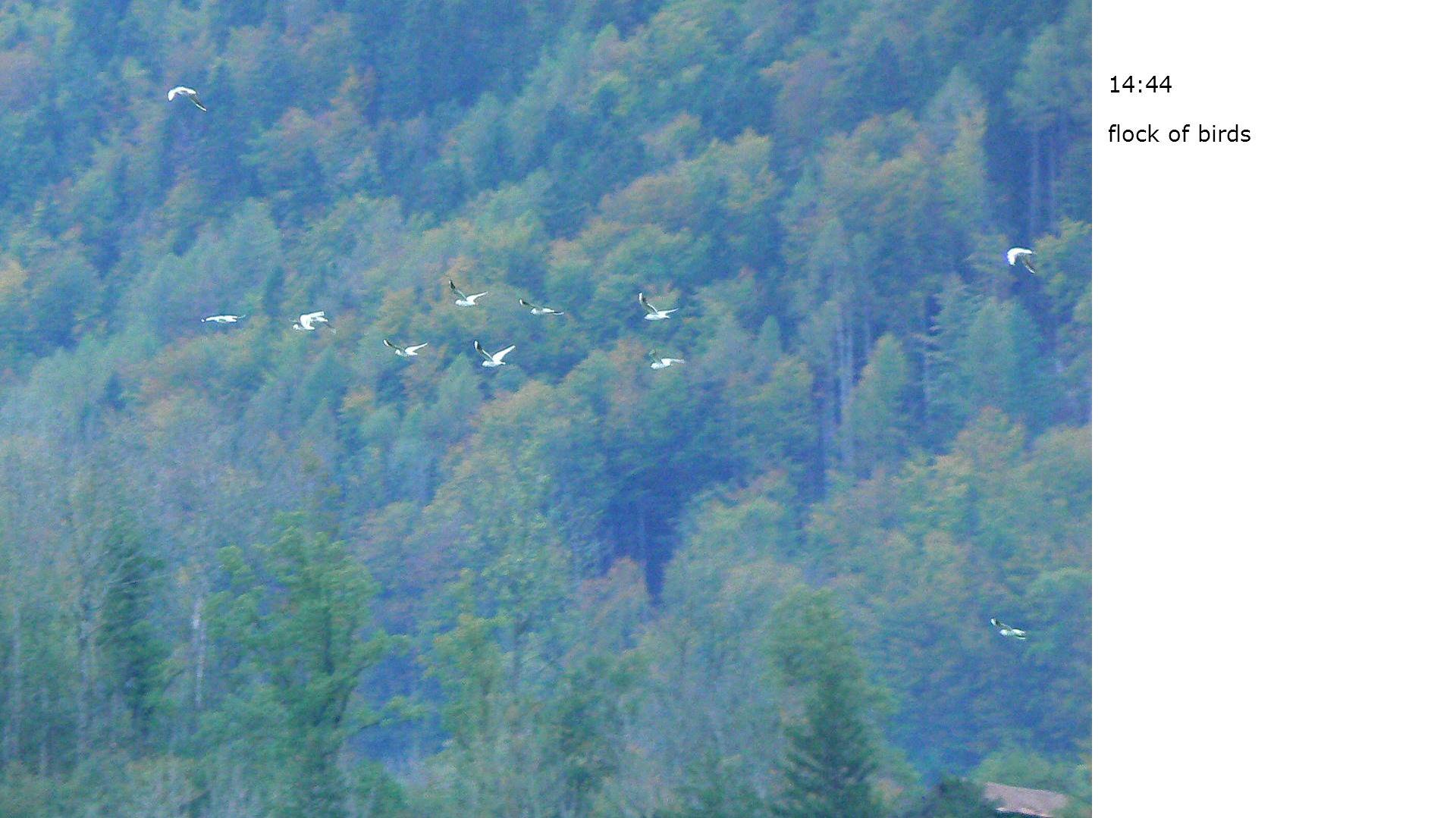 14:44 flock of birds