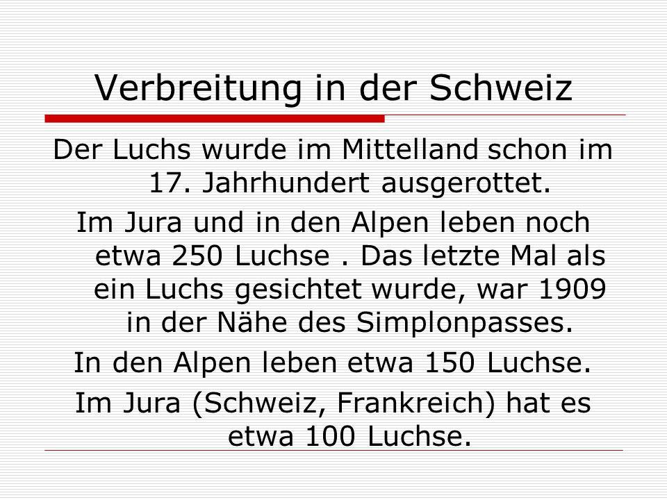 Verbreitung in der Schweiz Der Luchs wurde im Mittelland schon im 17. Jahrhundert ausgerottet. Im Jura und in den Alpen leben noch etwa 250 Luchse. Da