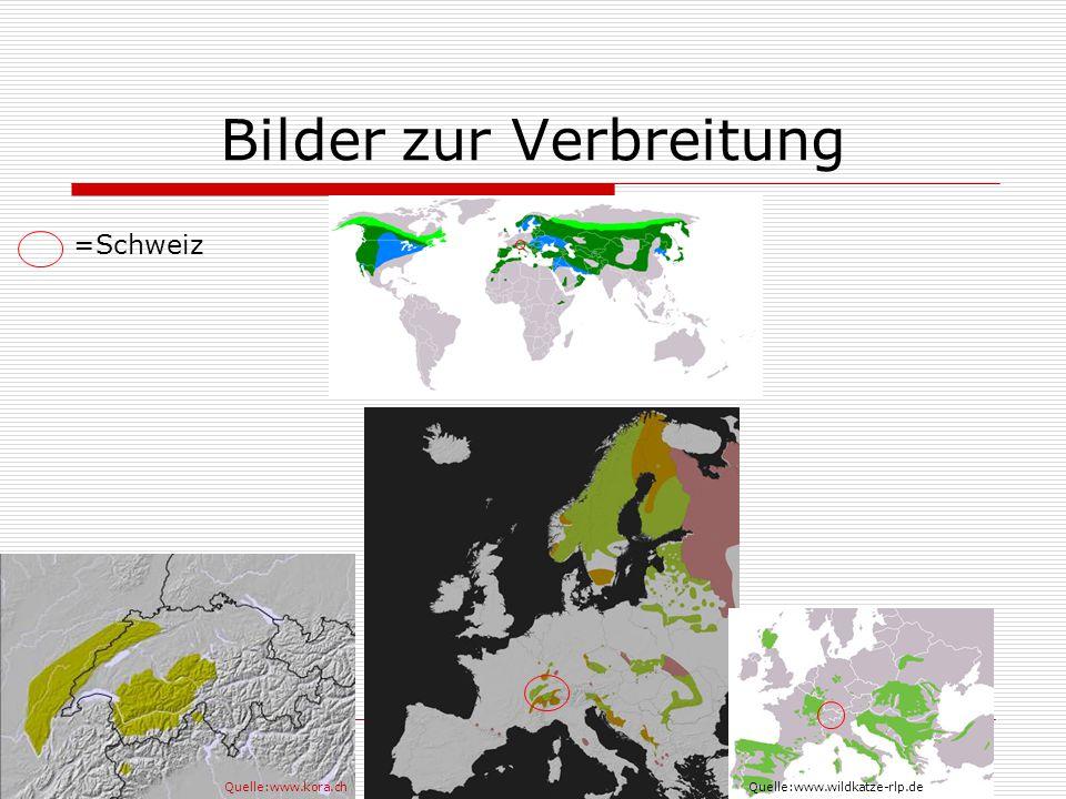 Bilder zur Verbreitung Quelle:www.kora.chQuelle:www.wildkatze-rlp.de =Schweiz