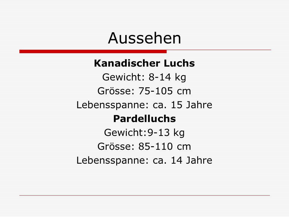 Aussehen Kanadischer Luchs Gewicht: 8-14 kg Grösse: 75-105 cm Lebensspanne: ca. 15 Jahre Pardelluchs Gewicht:9-13 kg Grösse: 85-110 cm Lebensspanne: c