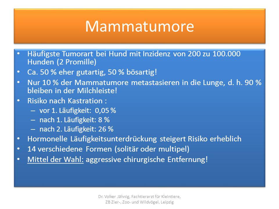 Mammatumore Häufigste Tumorart bei Hund mit Inzidenz von 200 zu 100.000 Hunden (2 Promille) Ca. 50 % eher gutartig, 50 % bösartig! Nur 10 % der Mammat