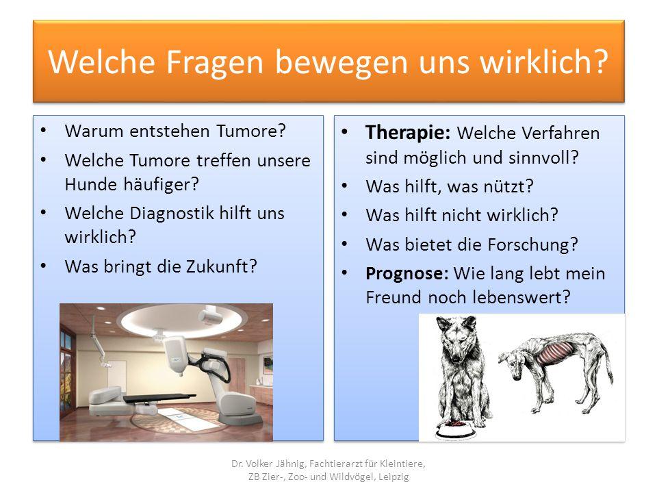 Häufigkeit von Tumoren beim Hund Die Hälfte aller Hunde stirbt an einem Tumor.