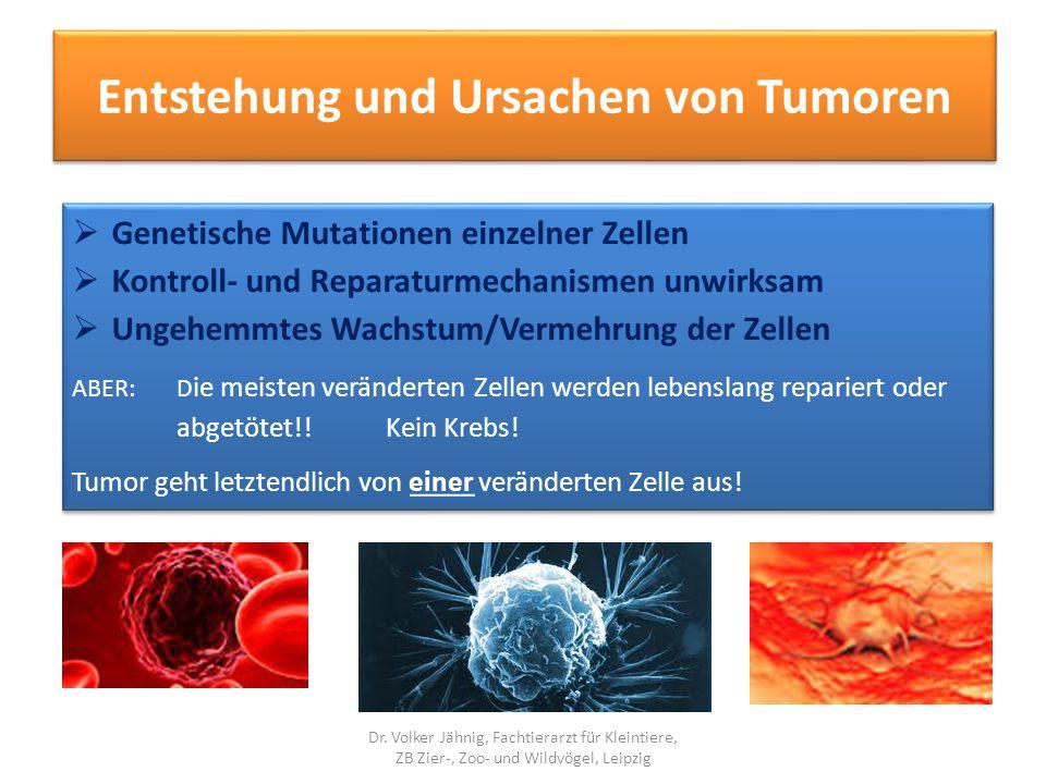 """Ursachen und Dispositionen  Physikalische: Strahlung (UV, Röntgen, ionisierende…)  Chemische: Toxine (Biphenyle, Nikotin…)  Genetische: Rassedispositionen (Boxer: Leukose, Hauttumore)  Größe: große Rassen: Knochentumore  Infektion: Virusgenese bei Leukose (Rind, Katze, Meerschweinchen)  """"hormoneller Einfluss auf Tumor (Frühkastration – Mamatumoren)  Alter: größtes Krebsrisiko!."""