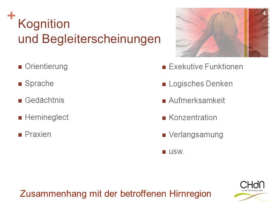 + Kognition und Begleiterscheinungen 4 Zusammenhang mit der betroffenen Hirnregion Orientierung Sprache Gedächtnis Hemineglect Praxien Exekutive Funkt
