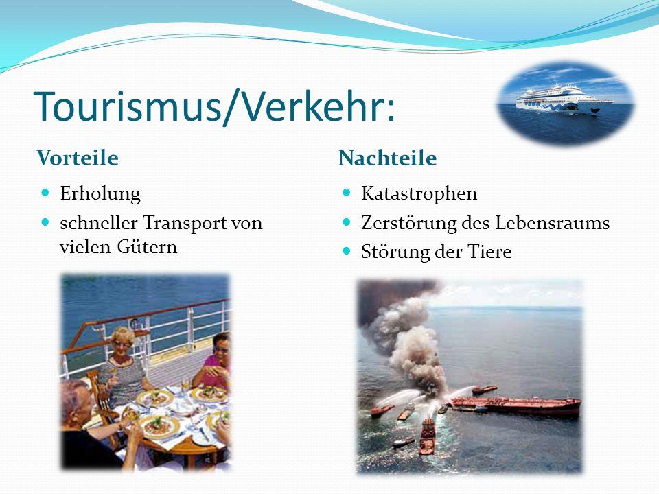 Tourismus/Verkehr: Vorteile Nachteile Erholung schneller Transport von vielen Gütern Katastrophen Zerstörung des Lebensraums Störung der Tiere